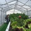 L'impianto acquaponica per la produzione sostenibile e biologica.