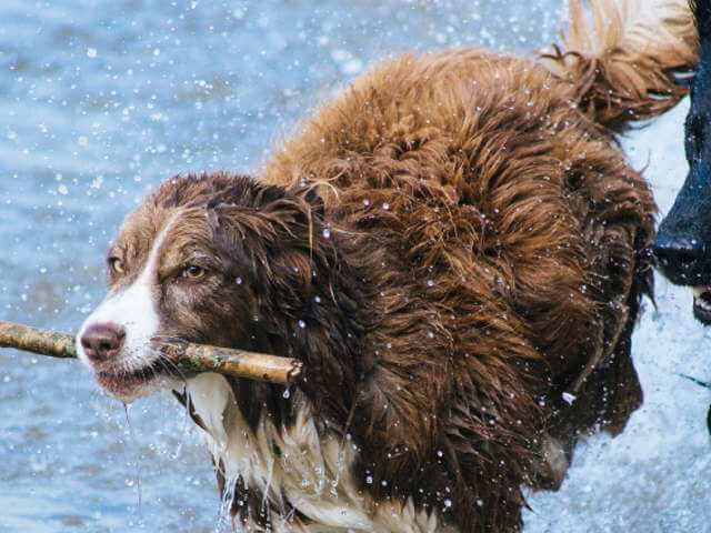 Il caldo e la salute degli animali domestici