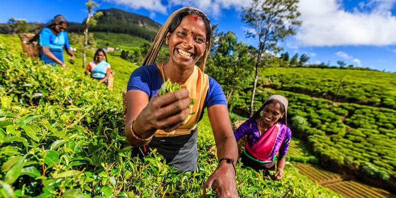 Tea Tree: il meraviglioso olio essenziale!