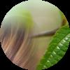 tea-tree-protezione-capelli
